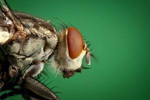 مكافحه الحشرات بجده 0540987281