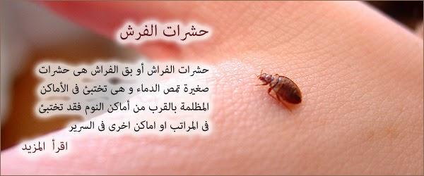 مبيدات بالطائف 0530475824 0555972329