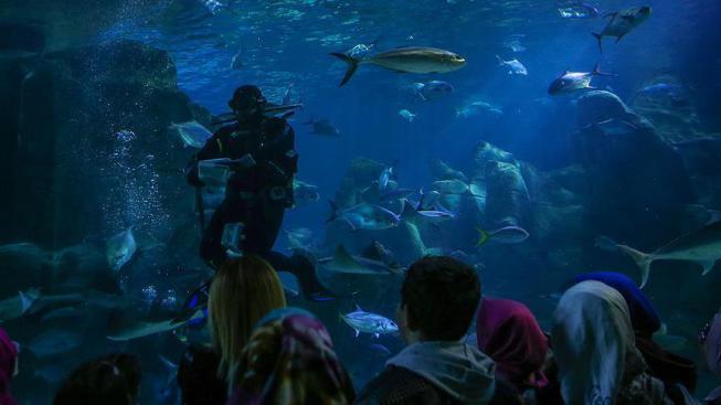 """""""أكواريوم إسطنبول"""".. عندما تجتمع المتعة والمغامرة 582665203"""