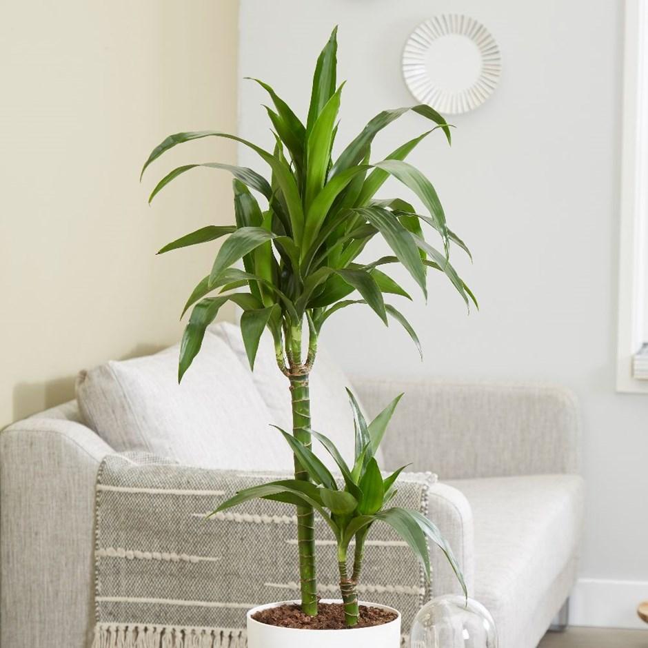 تعرف عن النباتات المنزلية التي لا تحتاج للشمس 540105148