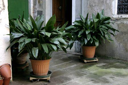 تعرف عن النباتات المنزلية التي لا تحتاج للشمس 605414801