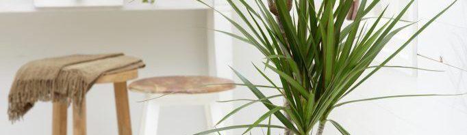 تعرف عن النباتات المنزلية التي لا تحتاج للشمس 948227165